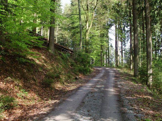 immer noch sehr guter Waldweg.