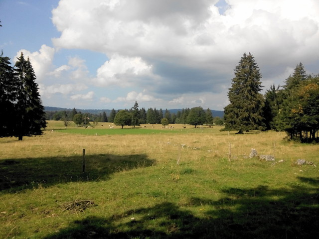 Nordauffahrt - Juraweiden