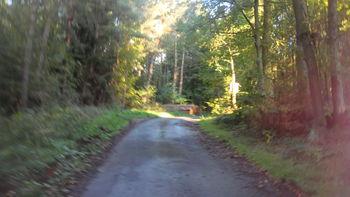 Einsame Straße im Wald