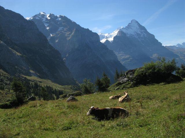 Blick während der Abfahrt Grosse Scheidegg
