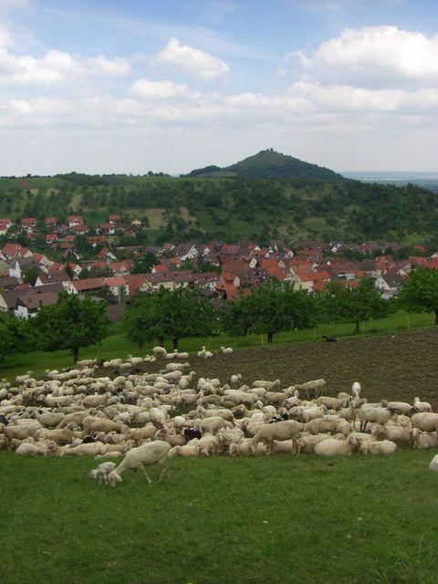 Typische Albbweohner vor Hepsisau mit der Limburg im Hintergrund.