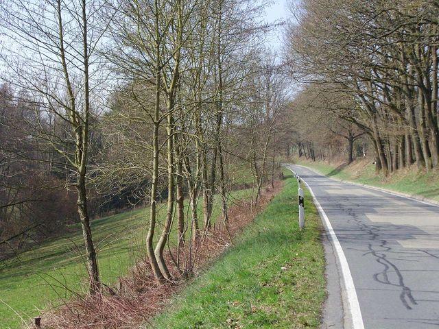 hinter Steinbach im Steinbachtal.