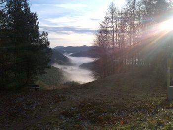 herbstliche Stimmung im Queichtal (früh morgens am 29.12. ...)
