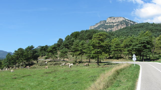 Ostanfahrt: Hier kann die Kuh noch Kuh sein....