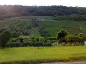 Blick auf den Rosenberg vom Ortseingang Moselkern.