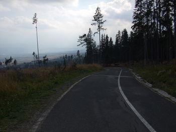 Im oberen Teil. Die geschädigte Waldzone reicht bis auf über 1100 Meter.