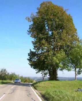 Der höchste Punkt des Strasse ist an der großen Eiche erreicht - ca. 200m vor Oberböhringen von Geislingen aus gesehen. Auf der anderen Seite der Strasse befindet sich ein Sendemast hinter einer Villa am Golfplatz.  Von Geislingen kommend sieht man hier das erste Mal das Dörfchen Oberböhringen.