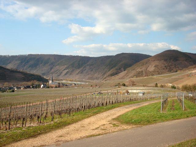 Fahrt durch die Weinberge und Blick auf Bruttig.