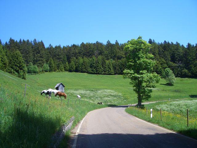 Schwarzwaldidyll