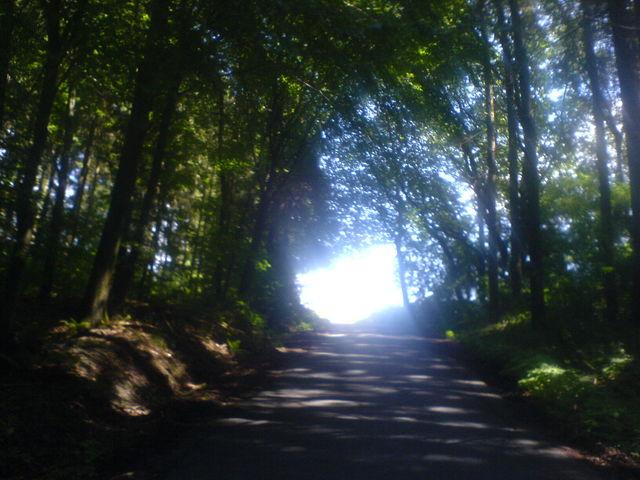 Der Blick bei 18 % gen Himmel aus dem Wald heraus