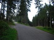 Dann lichtet sich allm�hlich der dichte Nadelwald.
