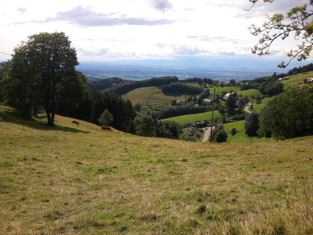 Rheinebene und Vogesen