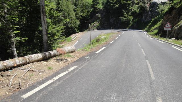 65. steil schlängelt sich die Strasse durch duftenden Kiefernwald