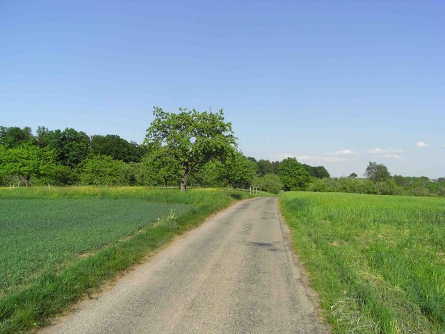 1. Alternative: Passhöhe (beim Obstbaum) über Cäsarstrasse