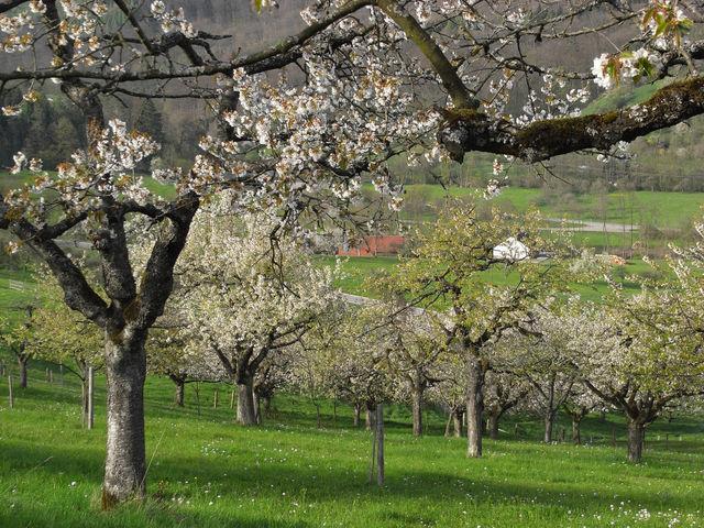 Mannshaupten 07. Zwischen dem Frühlingsblühen zeigt sich der erste Teil des Anstieges.