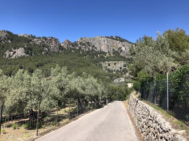 Coll d'en Marqès Richtung Port de Soller #2 S - Oliven (IMG 2226).