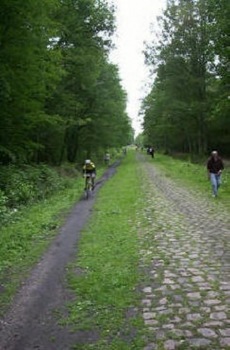 Im Wald von Arrenberg