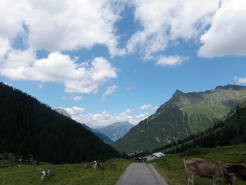 Die Alp auf 1700m