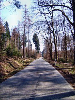 Gemächlich geht es weiter durch den spätwinterlichen Wald
