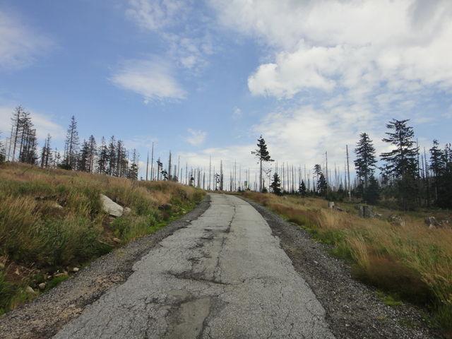 Tote Bäume, aber dennoch sehr viel Leben