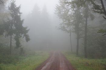 Blick auf die Wegspinne im nebligen Wald.