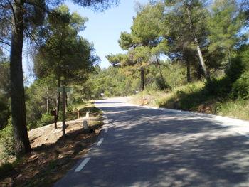 Die Straße windet sich in einem Kiefernwald hinauf.