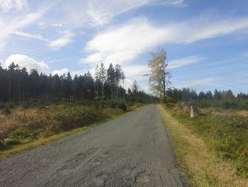 Stichstraße entlang von Jungbaumbestand