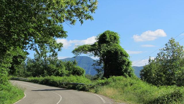 Südwestanfahrt: Der Busch sieht aus wie Trapper Geierschnabel. Die Nase trieft genau über dem Monte Falterona