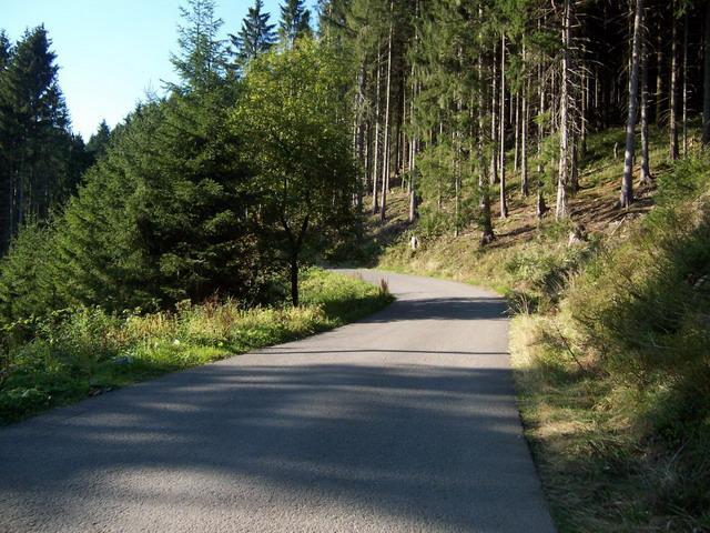 Südwestauffahrt von Wildemann, auf schmaler Straße durch den Wald...