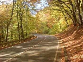 Westanfahrt - Im Wald auf toller Herbstpassage dem Kohlberg entgegen.