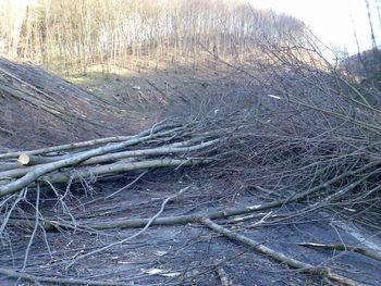 schön auch ein Hindernislauf die Steige entlang während der Holzsaison