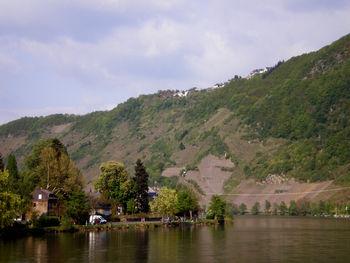Blick vom Moseltal hinauf nach Starkenburg.