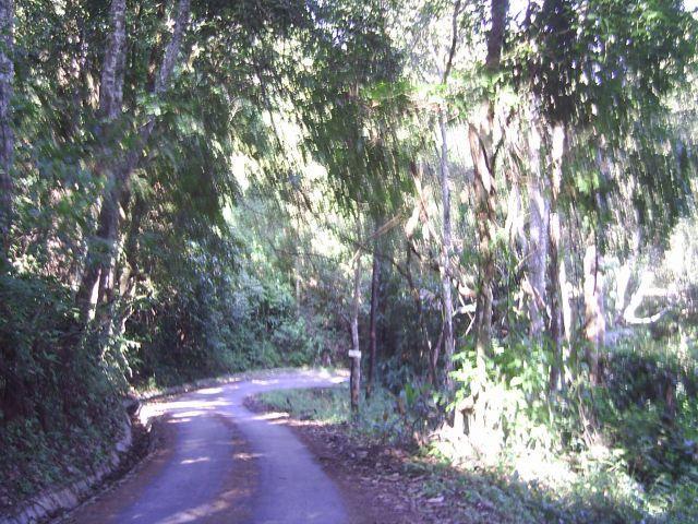 Die so vom Phuping Palast bis hinter den Gipfel führende Strasse hier schon hinter dem Gipfel Doi Pui. Nichts zum Schnell fahren.