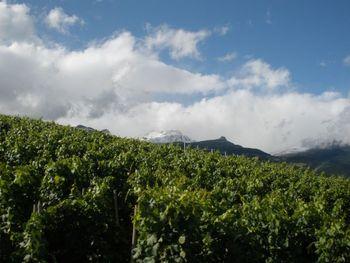 Julischnee und Wein.