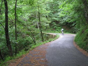 Der Pass macht seinem Namen alle Ehre. Ein schmales Asphaltband führt durch dichten Wald.