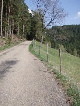 Frühjahr im Schwarzwald