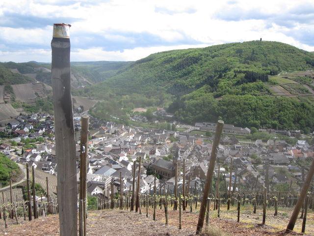 Blick über den Dernauer Weinberg ins untere Ahrtal.