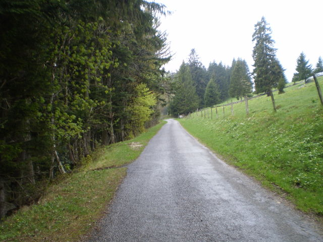 Langsam öffnet sich der Wald.