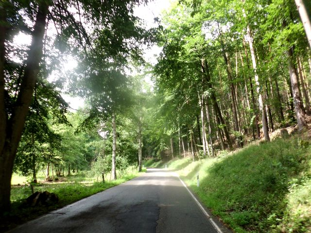 im schönen Litschbachtal
