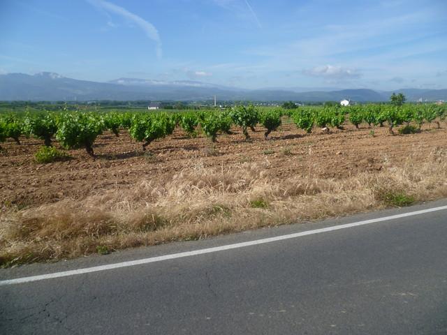 Noch einmal Weinfelder.