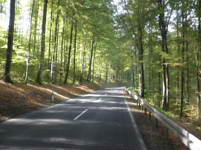 durch die Herbstsonne begünstigt wunderschöne Waldpassage
