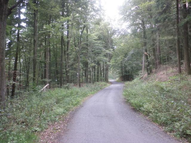 schmaler Waldweg,  und einsam