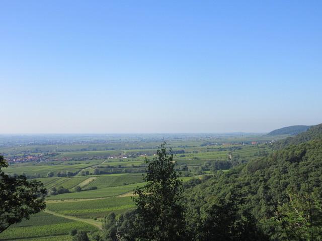 Weinberge bei Deidesheim.